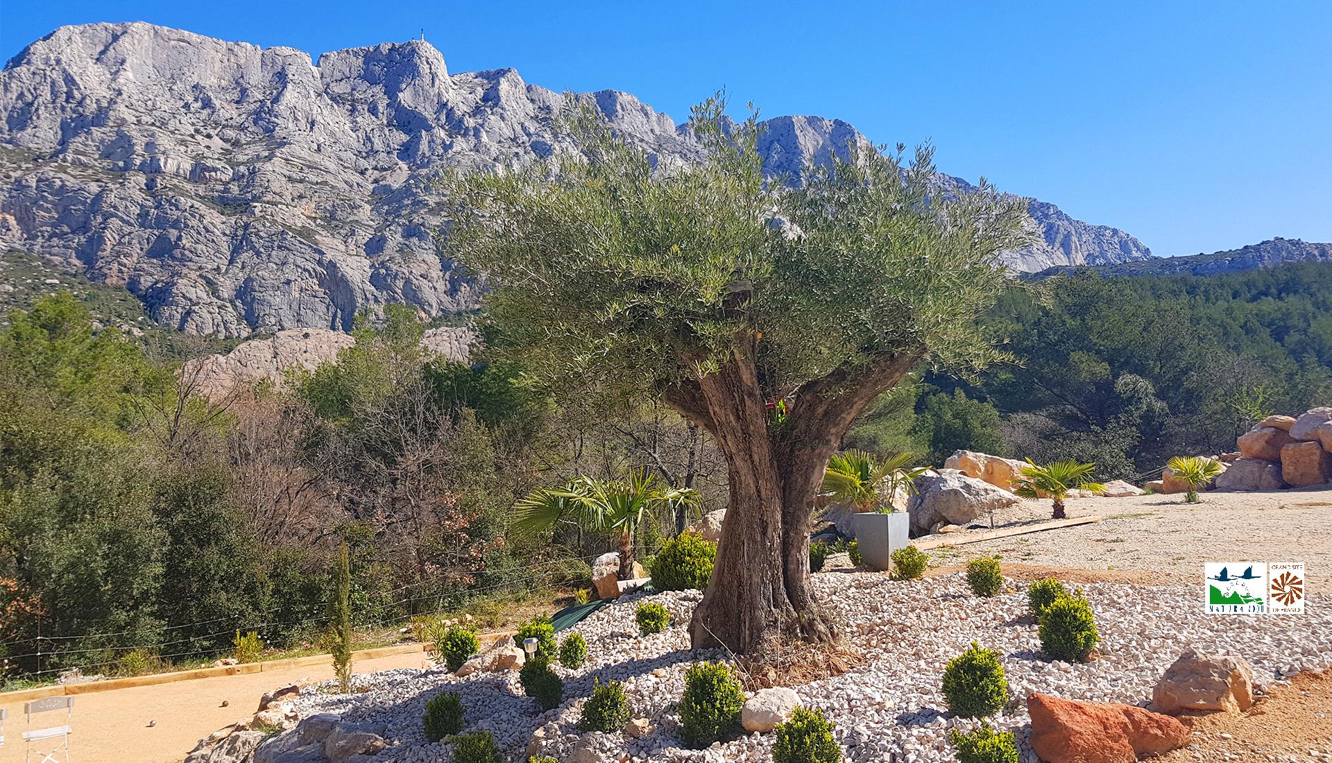 Vue avec olivier